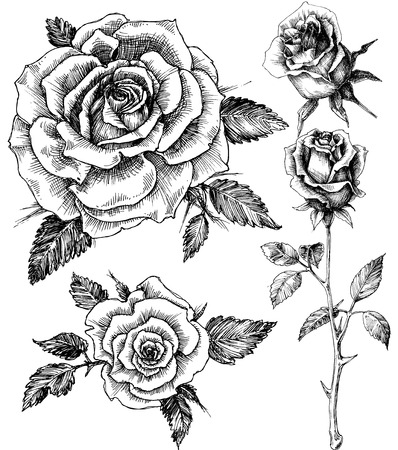 etch: Flowers set. Hand drawn rose vector, etch style Illustration