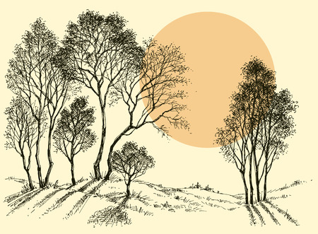 pencil drawing: Sunset in the forest. Trees wallpaper. Landscape sketch