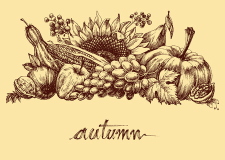 abundance: Autumn fruits and vegetables abundance. Fall background hand drawing