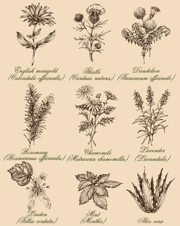 Flowers and herbs set. Medicinal plants and spices hand drawn, vintage engraving style. Botanical set for healthy living Çizim