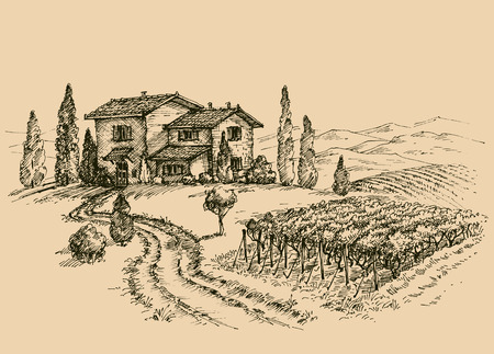 図面のブドウ畑。伝統的な農家のスケッチ