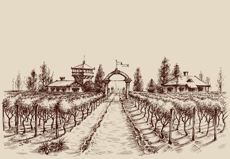 포도밭 벡터 드로잉, 에칭 스타일. 농장 입구와 포도 나무 문화 스톡 콘텐츠 - 61110299