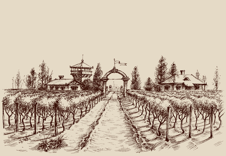 Vineyard vector drawing, etch style. Farm entrance and vine culture Stock Illustratie