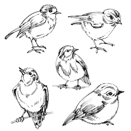 sit: Birds set. Hand drawn cute birds, black outlines for coloring