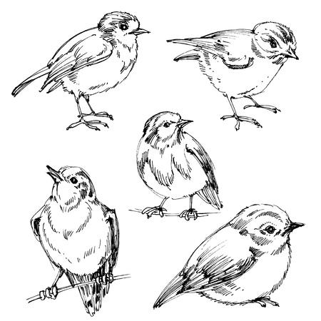 to sit: Las aves establecen. dibujados a mano linda de los pájaros, los esquemas negros para colorear