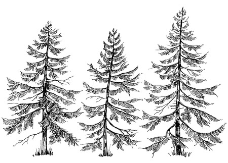 Pine trees collection. Hand drawn Christmas trees
