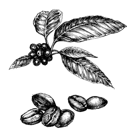 Coffee set. Coffee plant and beans isolated drawings