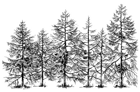 pine trees: Pine forest hand drawn border