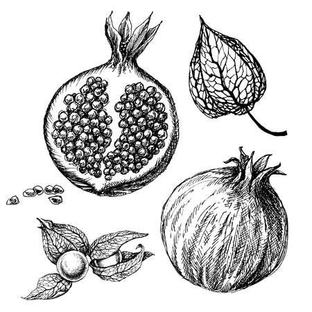 Pomegranate set, hand drawings isolated. Autumn physalis fruit