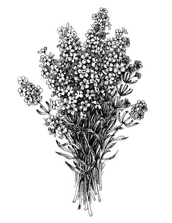 Lavender flower bouquet, floral engraving vector design Vettoriali