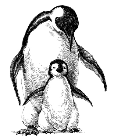 Penguins family. Cute baby penguin and parent drawing isolated Illustration