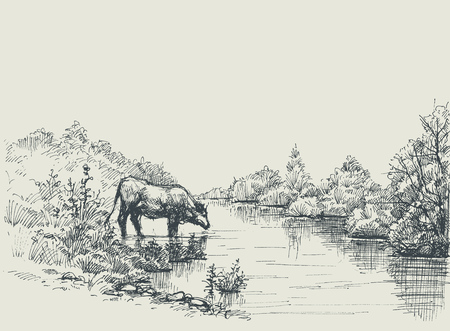 Cow drinking water at the river shore. Graphic landscape, artistic background Illustration