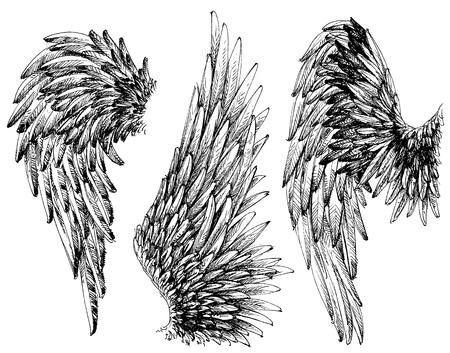 Vleugels vastgesteld. Getrokken collectie gedetailleerde vleugels