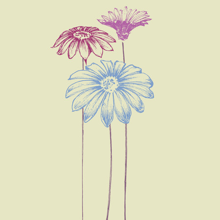 gerbera daisy: Hand drawn flowers. Beautiful daisy design for festive events Illustration