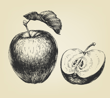 Hand drawn apple, whole and half