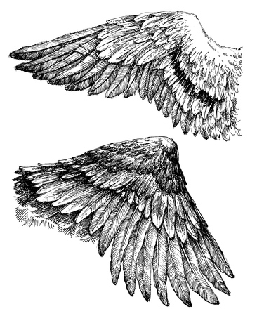 isolated: Wings vector drawing