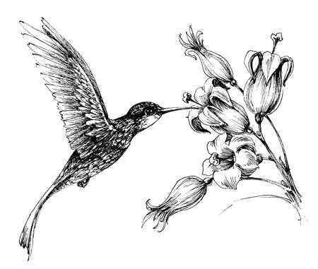 antique: Hummingbird in flight drawing
