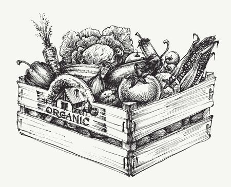 Wooden crate full of organic food isolated, farm organic vegetables, organic word written in the wood
