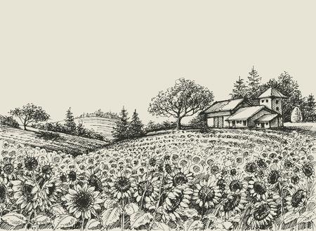 Wektor pola słonecznika