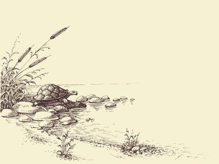 Dibujo de la mano de la escena de la naturaleza. Tortuga en la orilla del río