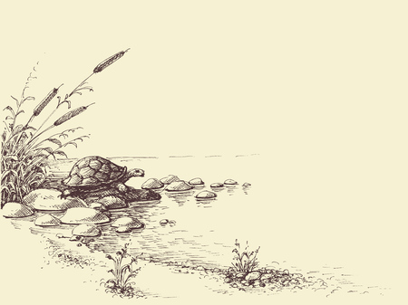 Nature scene hand drawing. Tortoise on river shore