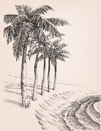 Palm trees on the beach drawing