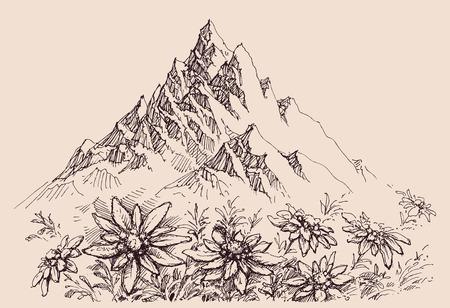 Mountain range and edelweiss flowers Ilustração
