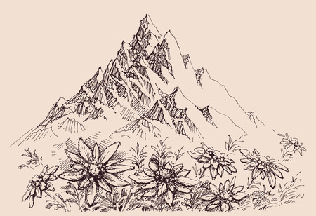 Mountain range and edelweiss flowers Illustration
