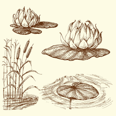 Water lily and water plants set  イラスト・ベクター素材