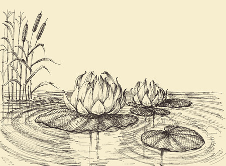 Water lily on the lake vector hand drawing  イラスト・ベクター素材