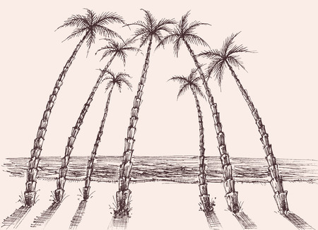 Palm trees beach, sea view hand drawing