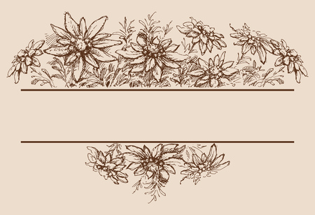 Edelweiss hand drawn borders and decorations