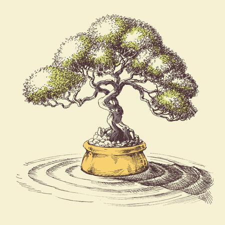 Bonsai Tree Drawing Stock Photos And Images 123rf