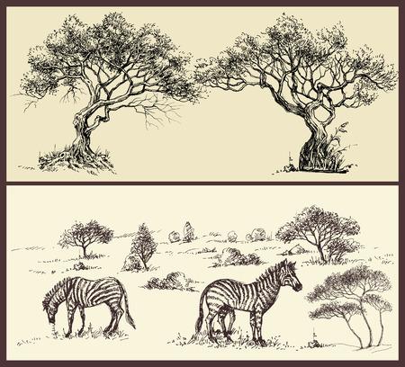 Nature banners set. Trees arch and savanna landscape with zebra Ilustração