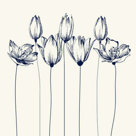 Tulip flowers background. Stylish floral card, hand drawn illustration for different events