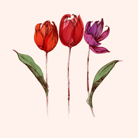 Red hand drawn tulip flowers bouquet