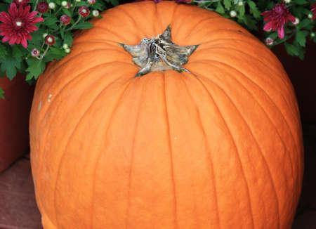 centered: Pumpkin centered between flowers