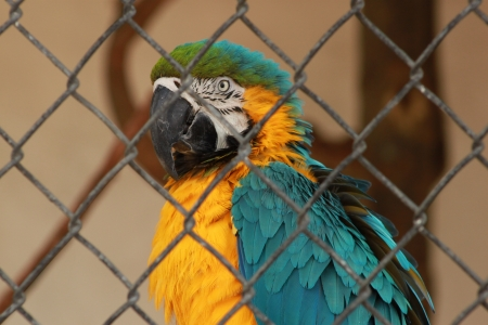 Profile of a blue and gold macaw