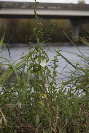 Single white wild flower in front of overpass over water