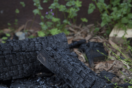 burnt: Three logs of burnt firewood Stock Photo