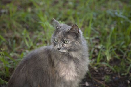 Kitten outdoors with green blur in the background