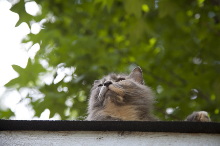 Cat staring down from a house roof