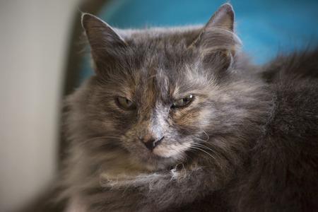 Grey cat resting indoors Imagens