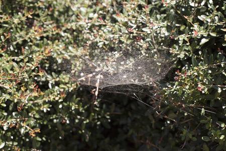 spiderweb: Thick spiderweb