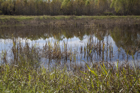 bayou swamp: Green grass at the edge of a marshland swamp