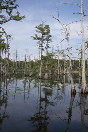 Line of trees growing within a Louisana bayou