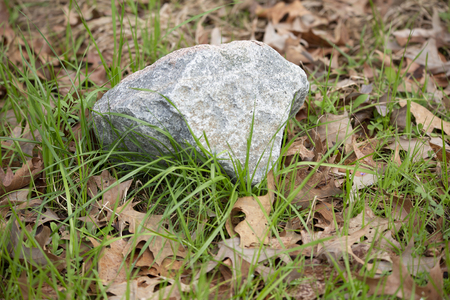 Large grey piece of granite on the ground during the fall season