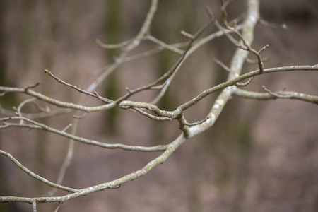 Close Up of Bare Tree Limbs during the Winter Season Stok Fotoğraf