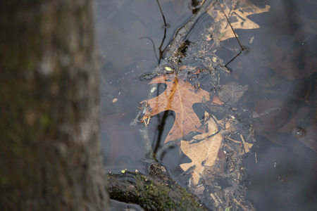 Autumn leaves floating in a shallow, dirty pond Stok Fotoğraf