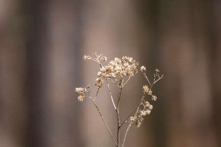 Close up of a bouquet of dried weeds 版權商用圖片